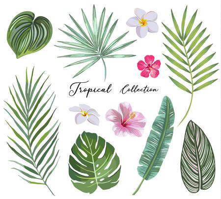 Illustration pour hand drawn Set of tropical leaves and flowers. vector design concept - image libre de droit