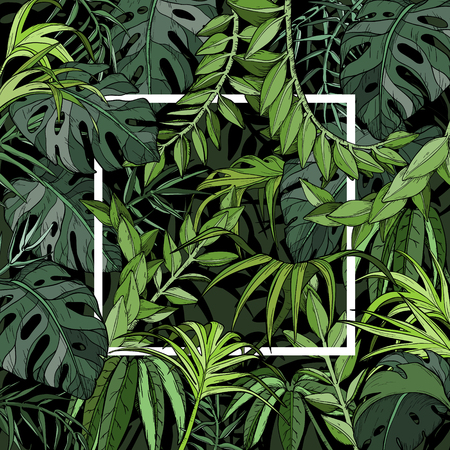 Ilustración de Vector Tropical background with palm leaves, jungle plants and white frame - Imagen libre de derechos