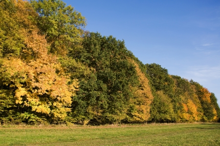 Trees in line in autumn colors in the Central Moravia, Czech Republic