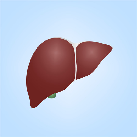 Realistic Illustration of Human Liver