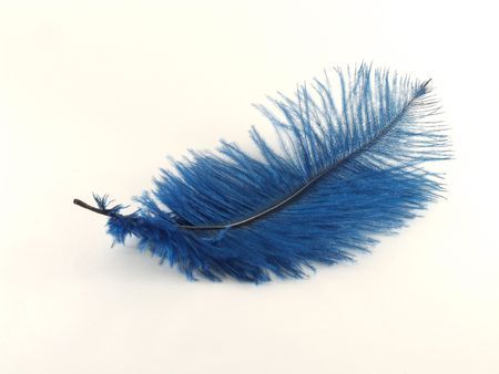 Isolated blue feather
