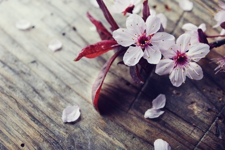 Spring blossom on rustic wooden plank