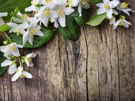 Photo for Beautiful jasmine flower on rustic wooden table - Royalty Free Image