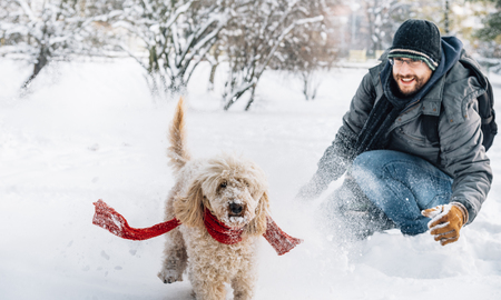 Photo pour Snowball fight fun with pet and his owner in the snow. Winter holiday emotion. Cute puddle dog and man playing and running in the forest. Film filter image. - image libre de droit