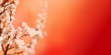 Foto de Spring blossom border over red background with copyspace. Chinese new year nature design. Flower decor for traditional asian spring festival. Lunar new year celebration. - Imagen libre de derechos