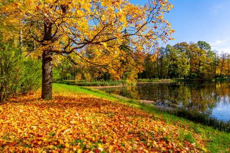 Photo pour Golden autumn (fall) in Alexander park, Tsarskoe Selo (Pushkin), Saint Petersburg, Russia - image libre de droit
