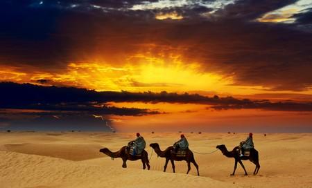 Camel caravan going through desert at sunset.