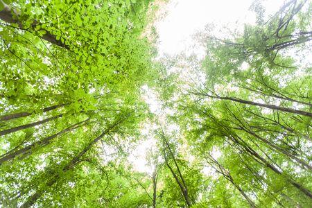 Foto de Spring green forest , view up, beautiful nature landscape. - Imagen libre de derechos