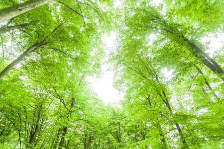 Photo pour Spring green forest , view up, beautiful nature landscape. - image libre de droit