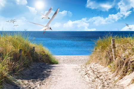 the baltic coast of germany in the summer