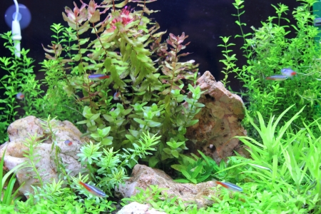 Empty aquarium with plants with small fishes