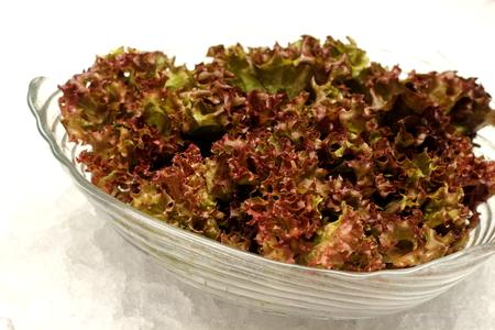 A macro of an organically grown red oak lettuce