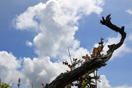 Natural crafts Ishiyama in Kochi (sky and trees)