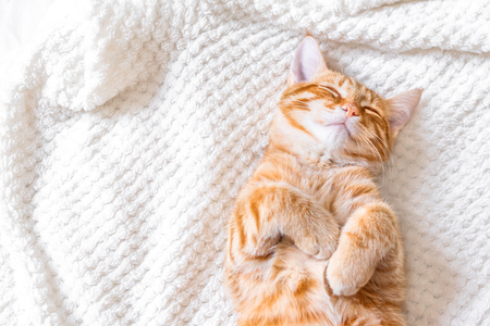 Foto de Ginger cat sleeping on soft white blanket, cozy home and relax concept, cute red or ginger cat. - Imagen libre de derechos