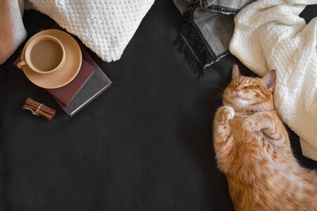 Photo pour Ginger cat sleeping on cozy black sofa. Home coziness with cat, soft plaid, coffee and books. Cozy home and hygge concept, copy space. - image libre de droit