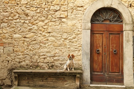 Foto de small dog sitting on stone bank in front of the tuscan house, Italy, Europe - Imagen libre de derechos