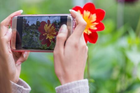 Photo for Hands of woman taking picture with phone of pink flower - Royalty Free Image