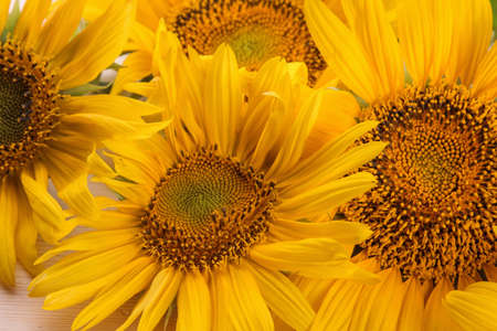 Foto de a lot of yellow bright sunflower flowers close-up on a natural wooden table - Imagen libre de derechos