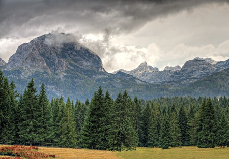 Haunted woods of National Park Durmitor with bad weather and mighty rocky peaks Montenegro