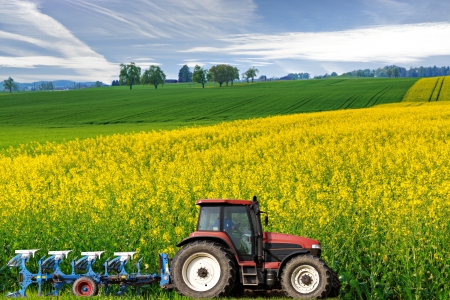 Photo pour tractor with plough drives along beautiful sweeping blossoming bright yellow canola fields, concept for agriculture business - image libre de droit