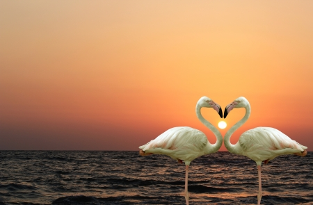 Photo pour Beautiful and romantic flamingo couple  - image libre de droit