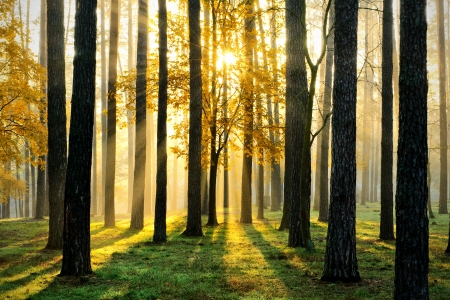 Foto de Beautiful morning scene in the forest with sun rays and long shadows - Imagen libre de derechos