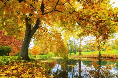 Photo pour Beautiful autumn in the park. Trees with golden brown leaves and a pond - image libre de droit