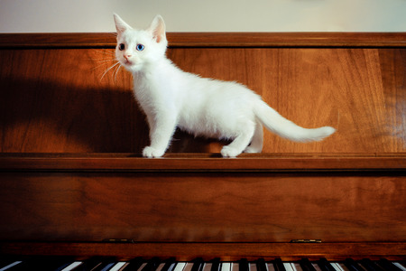 The Persian cat is a long-haired breed of cat characterized by its round face and short muzzle. In Britain, it is sometimes called the Longhair or Persian Longhair.