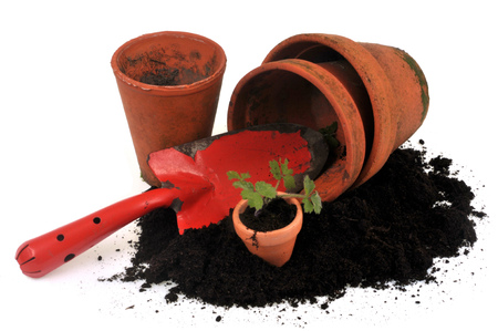 Flowerpots, potting soil, dibble and plant