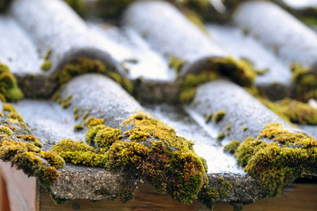Vegetable foam on a tiled roof