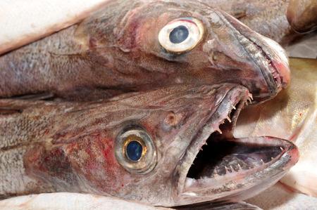 Photo pour Hake on the stall of a fishmonger - image libre de droit