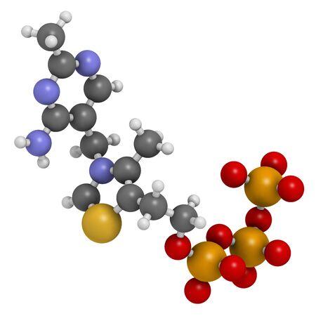 Photo pour Thiamine triphosphate molecule. 3D rendering. Atoms are represented as spheres with conventional color coding: hydrogen (white), carbon (grey), oxygen (red), nitrogen (blue), sulfur (yellow), phosphorus (orange). - image libre de droit