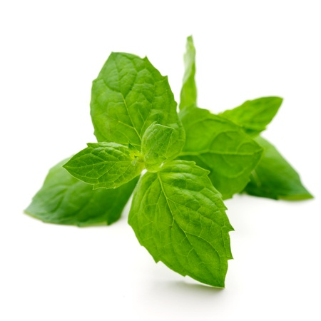 Fresh mint leaves on white isolated background