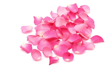 Closeup rose petals on white background