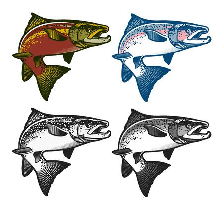 Illustration pour Salmon Fish - Vector Illustration. Logo Template. Vintage Salmon Fishing emblems, labels and design elements.  Vector illustration. - image libre de droit
