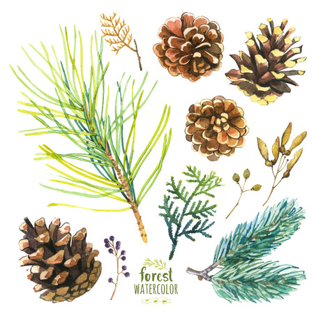 Set of autumn branches of pine, spruce and arborvitae. Collection of herbarium of the woods.