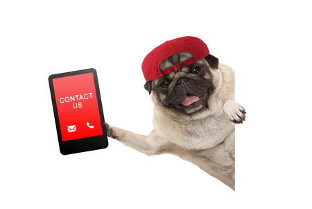 Photo pour frolic pug puppy dog with red cap, holding up tablet phone with text contact us, hanging sideways from white banne, isolated - image libre de droit