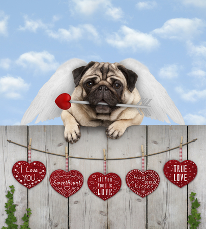 Photo for cute pug puppy dog with cupid angel wings and arrow, hanging on fence with wooden hearts with love text, blue sky - Royalty Free Image