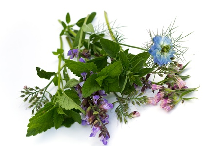 mixed herbs, fennel flower,thyme,mint,borage,isolated on white