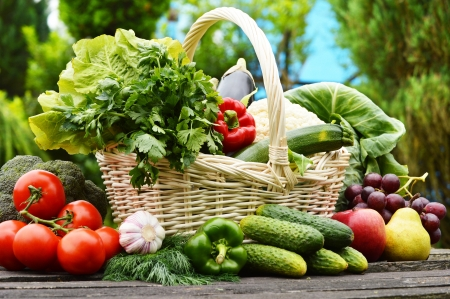 Fresh organic vegetables in wicker basket in the gardenの写真素材