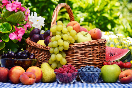 Foto de Basket of fresh organic fruits in the garden - Imagen libre de derechos