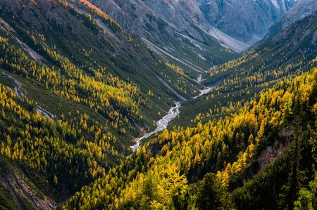Photo pour wild, untamed river and larches in Val Cluozza in Swiss National Park - image libre de droit