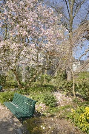 Foto de Lonely green bench at the  shadow of great tree with pink flowers in  the botanical garden in Leuven, Belgium. - Imagen libre de derechos