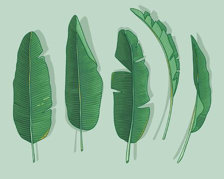 Illustration pour banana leaves - image libre de droit
