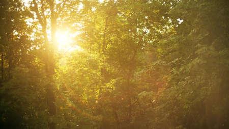 Foto de Warm summer rain on a sunny day - Imagen libre de derechos