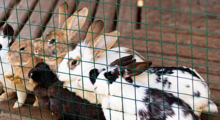 Cute funny rabbits in a cage closeup. domestic fluffy pets. animal protection.