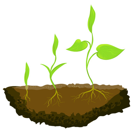 three plants growing in the ground. vector illustration