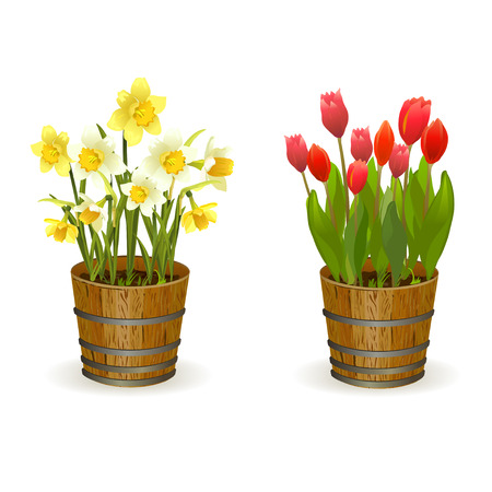 Illustration pour Spring flowers daffodils and tulips. vector illustration - image libre de droit