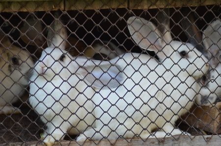 Photo pour rabbits in a cage - image libre de droit