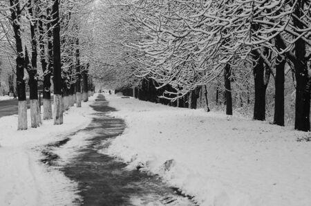 Photo pour snow landscape winter covered wood frost view - image libre de droit